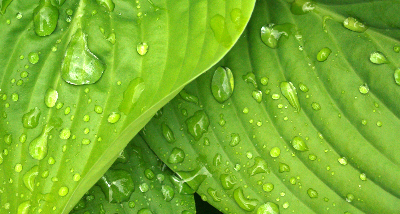 We CARE it With innovative FUNGICIDES formulation